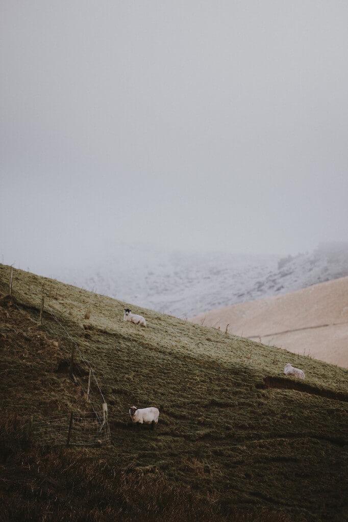 annie-spratt wool